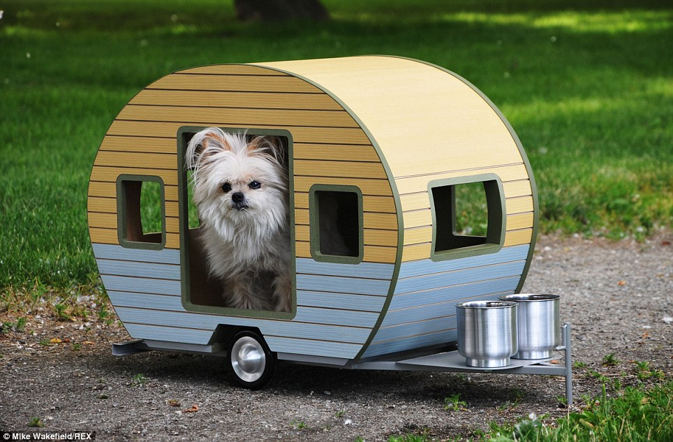 Hire one of our pet friendly campervans